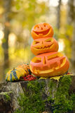 Halloween scary pumpkin in autumn forest Royalty Free Stock Photos