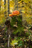 Halloween scary pumpkin in autumn forest Stock Photography