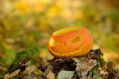 Halloween scary pumpkin in autumn forest Stock Images