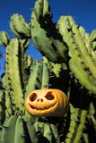 Halloween scary pumpkin on the cactuses backgroung Stock Photo