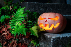 Halloween Scary Pumpkin in the grass with dry leaves and ferns Stock Photography