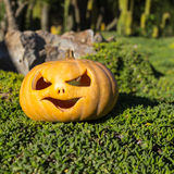 Halloween scary pumpkin in the green grass Stock Photo