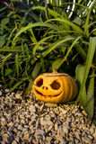 Halloween scary pumpkin in the gren grass brushwood Royalty Free Stock Image