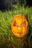 Halloween scary pumpkin in the gren grass Royalty Free Stock Photo