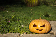 Halloween scary pumpkin in the gren grass Stock Image