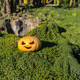 Halloween scary pumpkin in the gren tree brushwood Stock Photo
