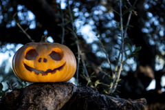 Halloween scary pumpkin in the gren tree brushwood Stock Image