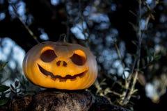 Halloween scary pumpkin in the gren tree brushwood royalty free stock photo