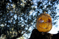 Halloween scary pumpkin in the gren tree brushwood Royalty Free Stock Images