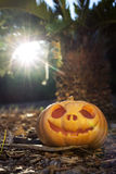 Halloween scary pumpkin with a smile in palm forest at sunrise Stock Images
