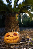 Halloween scary pumpkin with a smile in palm forest at sunrise Stock Photo