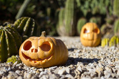 Halloween scary pumpkins on the cactuses backgroung Royalty Free Stock Images