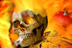 Halloween scary skull Stock Photography