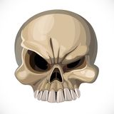 Halloween Scary skull Royalty Free Stock Photography