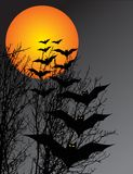 Halloween scene. With bats and trees Stock Photography