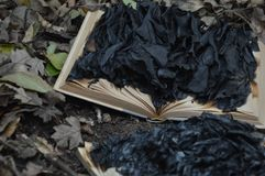 Half burned book on the ground of the forest , ashes cover the sites stock photography