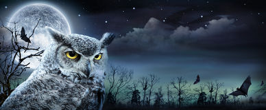 Free Halloween Scene With Owl Royalty Free Stock Photo - 60150265