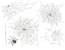 Free Halloween Seamless Pattern With Black Spider And Web Stock Photo - 104077450