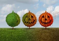 Halloween Season. Concept as a green tree transforming into an orange jack o lantern autumn leaves plant as a seasonal fall symbol for a festive celebration of Stock Images