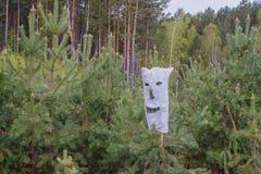 Halloween in Siberi? Zak met spleten voor ogen, neus en mond, versleten op een jonge pijnboom stock afbeeldingen