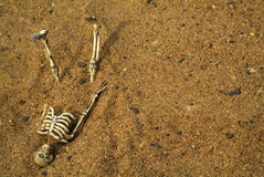 Halloween Skeleton bones Royalty Free Stock Photo