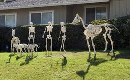 Halloween Skeleton group, horse, few people and dogs. In front of a house on green grass Royalty Free Stock Photo