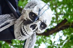 Halloween Skeleton hanging from a tree Stock Photos