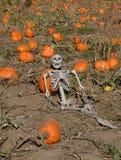 Halloween skeleton reclining in autumn pumpkin patch. Halloween skeleton reclining in autumn agricultural field of pumpkin patch with pumpkins Stock Images