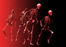 Halloween skeletons Stock Image