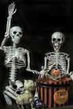 Halloween Skeletons getting ready to go trick or treating. Two Halloween Skeletons getting ready for the holiday stock image