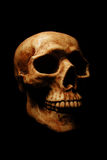 Halloween Skull. A dramatically lit Halloween skull on a black background Royalty Free Stock Image