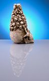 Halloween skull. Holloween skull reflections in blue background stock photo