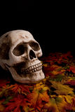 Halloween skull. Human skull over fallen leaves stock photo