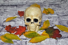 Halloween skull. And autumn fall royalty free stock photo