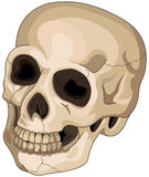 Halloween Skull. Illustration of scary Halloween skull Stock Images