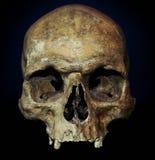 Halloween Skull. Old jawless Human Skull for Halloween on dark background Stock Photo