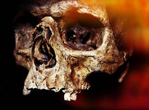 Halloween Skull. Old jawless Human Scull for Halloween in orange light Royalty Free Stock Image