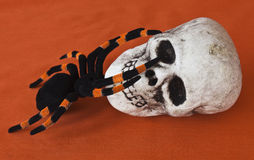 Halloween Skull and tarantula Stock Image