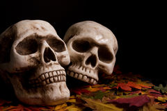 Halloween skulls. Human skulls over fallen leaves royalty free stock images
