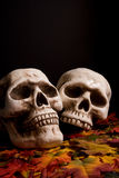 Halloween skulls. Human skulls over fallen leaves stock photo