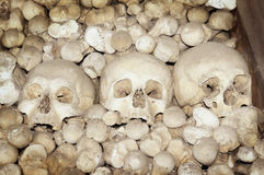 Halloween skulls and bones Stock Image