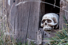 Halloween Skulls and Decorations Stock Image