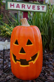Halloween smiling pumpkin Royalty Free Stock Photography