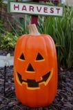 Halloween smiling pumpkin Royalty Free Stock Photography