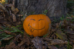 Halloween smiling pumpkin on the grass at autumn's park Royalty Free Stock Image
