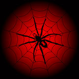 Halloween spider Stock Images