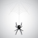 Halloween spider background Stock Images