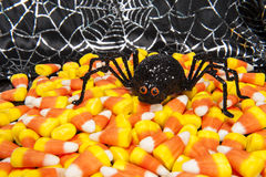 Halloween Spider with Candy Corn Stock Photography