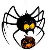Halloween Spider Cartoon holding a Pumpkin. Funny and Spooky Halloween Spider Cartoon Character holding a Black Scary Pumpkin. Original Vector Graphic Art Royalty Free Stock Images