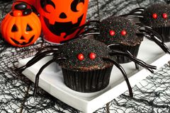 Halloween spider cupcakes with decor Stock Image